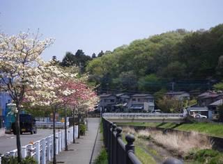 hanamizuki2011.jpg